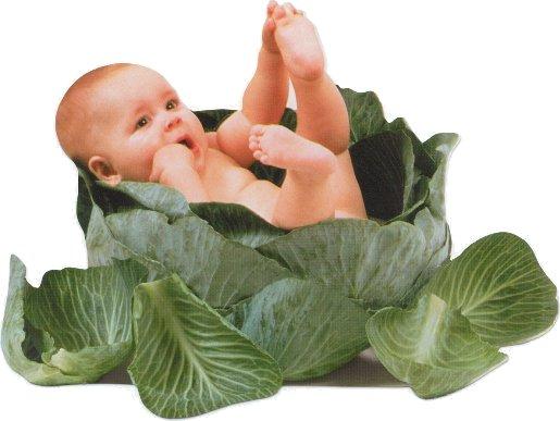 http://www.nebolei.ru/img/4/Cabbage.jpg