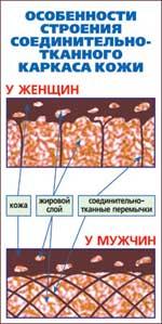 Различие в строении кожи у мужчин и женщин